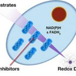 Mitochondrial Function Assay Technology - A Leap Forward
