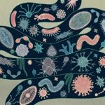 Gut Microbiome: New Approaches to Analysis