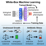 Understanding Antibiotic Mechanism of Action with Phenotype Microarrays™ and Machine Learning